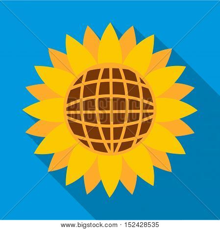 Sunflower icon. Flat illustration of sunflower vector icon for web