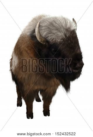 3D rendering of an American bison isolated on white background