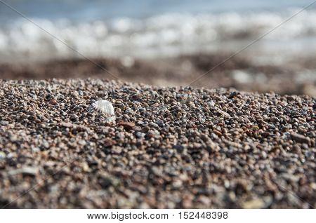 Shell on a sandy beach