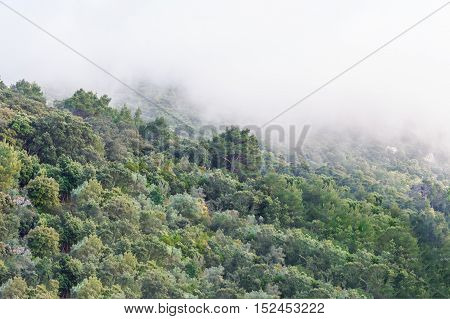 Forested mountainside with low lying cloud shrouded in fog a scenic landscape view.