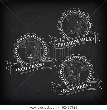 Cow calf bull cute muzzle face set collection variation sticker icon label tag badge symbol text eco farm beef tape. Vector beautiful square nice chalkboard sign outline drawn chalk illustration