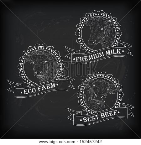 Cow calf bull cute muzzle face set collection variation Vector beautiful square nice chalkboard sign outline