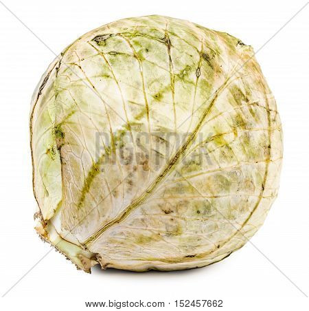 Rotten and dried cabbage isolated on white background