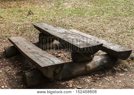 Wooden table and bench in mountain forest tourist rest area