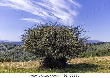 Tree - Monti della Laga (Aquila) - Italy