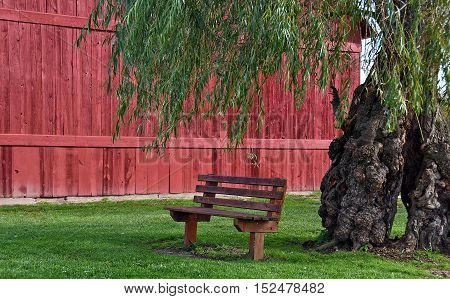 vacant bench under a weeping willow tree by red wooden barn