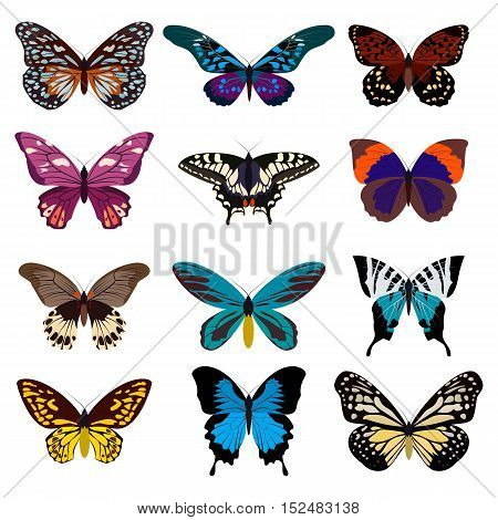 Big collection of colorful butterflies. Butterflies isolated on white. Vector illustration eps10