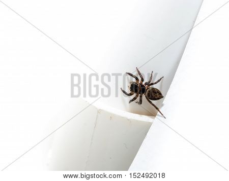 Spider On A White Wall