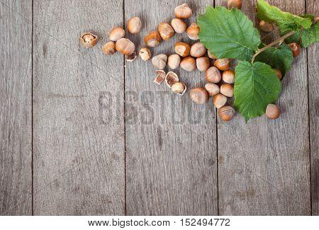 heap of fresh hazelnut in nutshel and few cracked