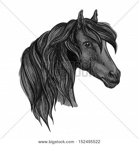 Purebred horse head sketch. Black racehorse of arabian breed. Powerful stallion for horse racing symbol or equestrian sporting themes design