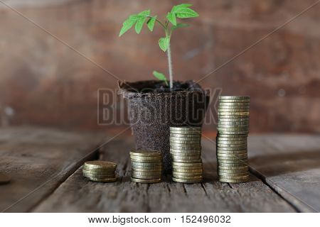 Photo Business success concept in the form of the germ of a small plant in a pot and the stacks of gold coins