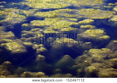 Algae grow in a small lake in Joliet, Illinois during May.
