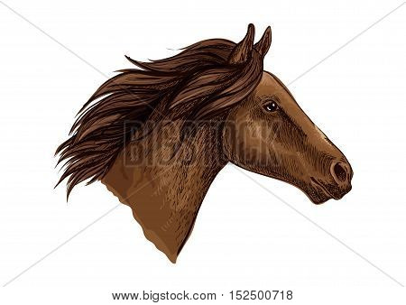 Brown horse head isolated sketch of running racehorse. Purebred arabian stallion for horse racing symbol, equestrian sport themes design