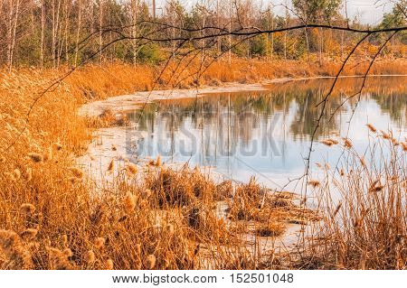 Warm autumn landscape with a lake and dry reeds growing near the shore. Nobody