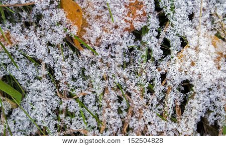 Snow, first snow texture, snow on the grass, early winter, snow pattern, nature texture, nature background, grunge plant background, late autumn