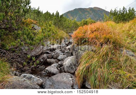 Beautiful mountain landscape. Mountain stream in the autumn scenery in High Tatra Slovakia.