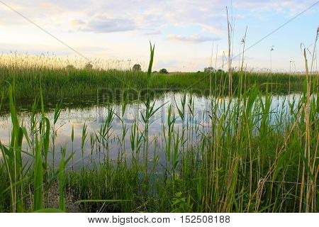 River with green reeds on the shore