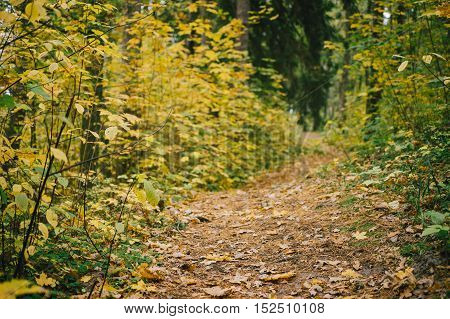 Narrow path in colorful autumn forest. Selective focus on foreground