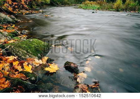 Falling autumn leaves on the bank of river long exposure image