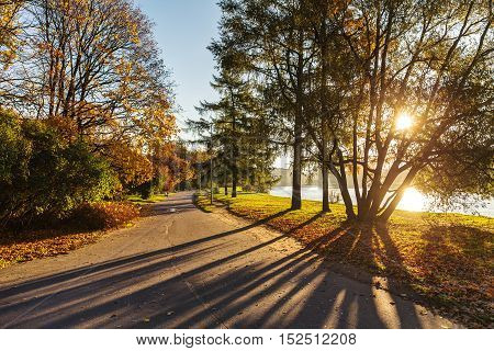 Road in the autumn park on a sunny morning