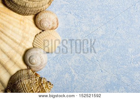 composition of different sea shells on a textured blue background