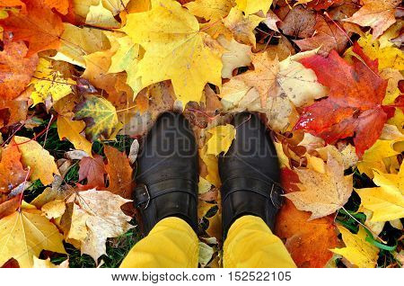 Legs in yellow pants and black shoes on the ground covered with red and yellow maple leaves. Look down.