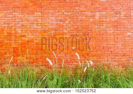 Exterior red brick wall with little grass decoration.