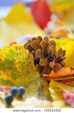 Autumn dry yellow leaves and pine cone
