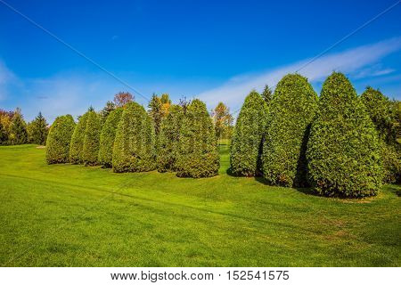 Decorative trimmed bushes on a green grass golf course. The concept of active tourism and golf tourism
