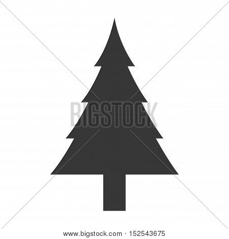 tree pine natural isolated icon vector illustration design