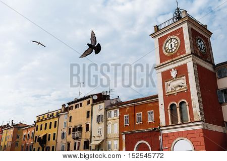 Clock Tower with bird On The Tito Square in the center of the historic European city Rovinj in Croatia