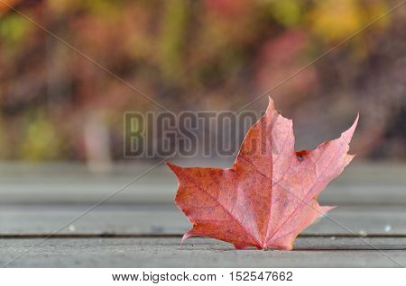 Red maple leaf sticking out of wooden surface on blurred background.