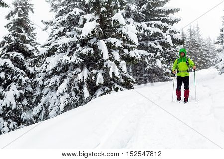 Winter trek in white woods. Man hiking trekking in winter white forest. Travel recreation fitness and healthy lifestyle in beautiful snowy nature. Motivation and inspirational white winter landscape.