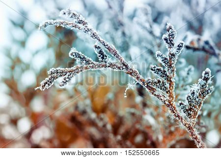 beautiful branch covered in glistening snowflakes and crystals on a bright background