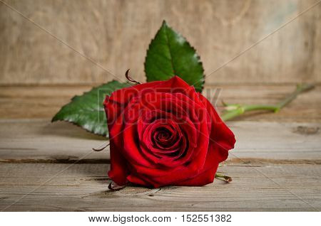 Beautiful Single Red Rose Lying Down On A Wooden Background