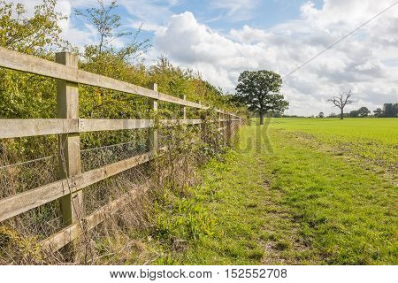 British autumn landscape with wooden fence and single tree
