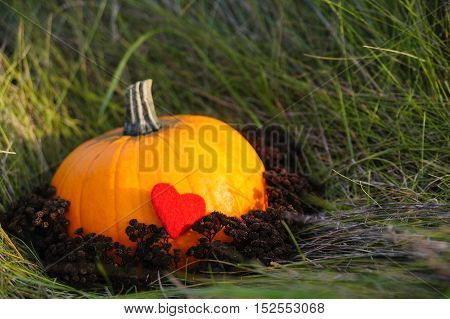 Harvested pumpkin on lawn over autumn nature grass background with felted heart