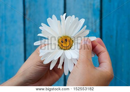 Chamomile with a smile in human hands on blue blurred background selective focus
