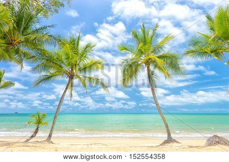 Palm trees in tropical north Queensland, Australia