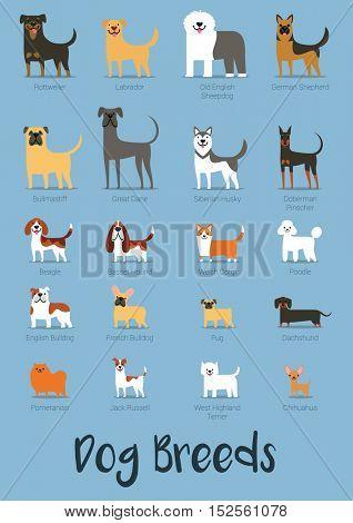 Set Of Dog Breeds Vector Illustration