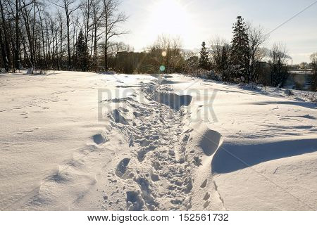 Path In The Snow In A Cold Winter Day