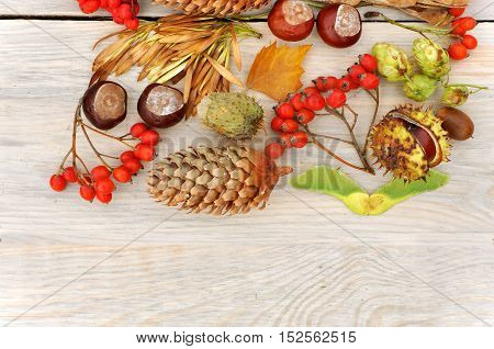 Autumn Still Life. Rowan berries pine cones walnut chestnuts and dried herbs on a light wooden surface. Top view. Empty space.