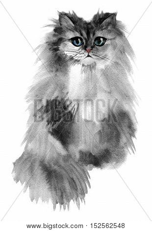 Portrait of a gray cute cat with blue colored eyes on white background