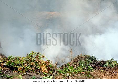 The process of burning trash. Green grass and weeds on the background of white smoke.