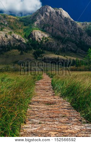Wooden path through the peat bog. Altai