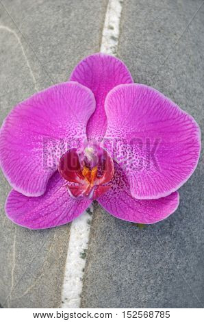 Pink orchid and striped stones texture