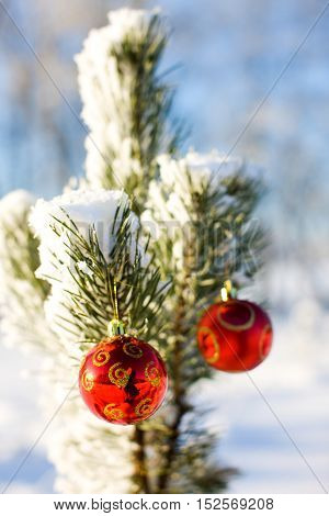 Two red decorative christmas balls with snow on pine tree ourdoors