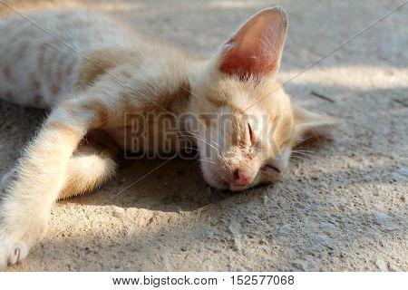 Cute soft yellow cat sleeping alone nature background