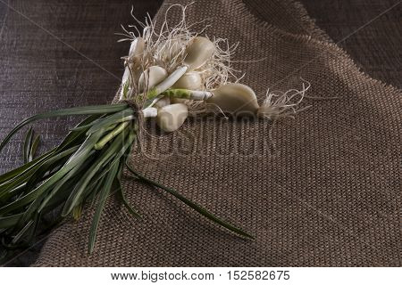 green garlic on a rough canvas in the Gothic style