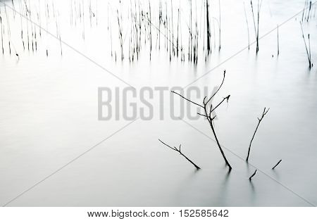 Abstract nature detail of water reeds and their reflections on the surface of a lake.